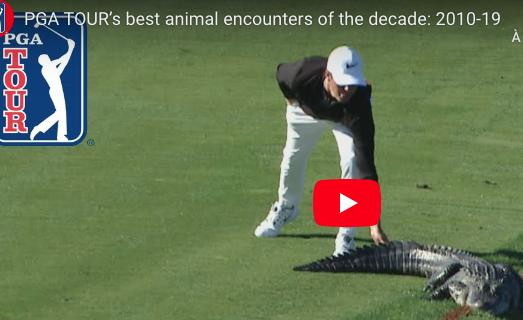Les plus belles vidéos de rencontres avec des animaux sur les golfs