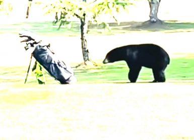 ours sac de golf canada